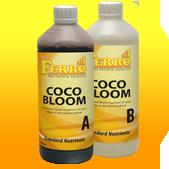 Cocos Floraison